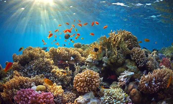 Reservas naturales y playas de México Playas del mundo